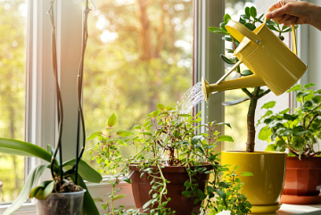 We water your plants according to your recommendations with our professional experiences.