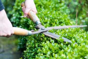 Maintaining a garden is easier said than done. Mobile Handyman brings you specialized trimming and pruning services in Switzerland to upkeep your garden. It is our goal to keep your garden looking beautiful and well-maintained on a regular basis while keeping your budget intact!